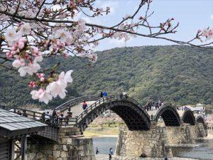 安本建設 桜 錦帯橋